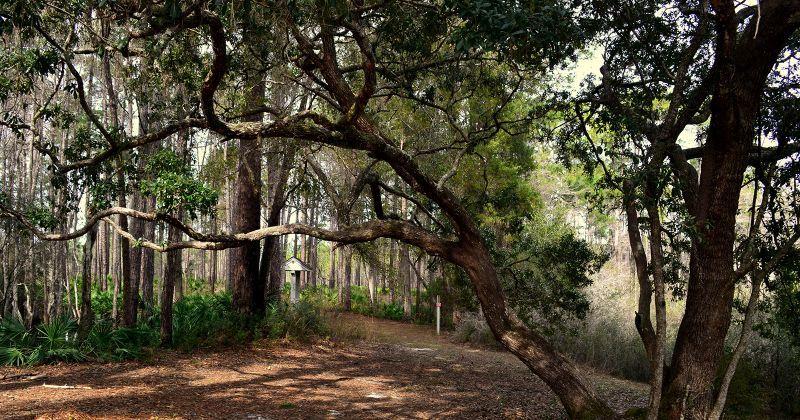 Wright Lake Recreation Area Trail