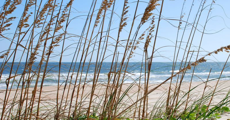 Dr. Julian G. Bruce St. George Island State Park - seaoats and white-sand beach