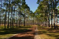 Ochlockonee River State Park - driving the nature trail