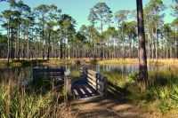 Ochlockonee River State Park - viewing platform over pond on nature trail