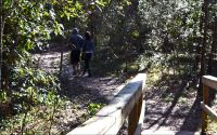 Footpath from boardwalk at Wakulla Springs State Park