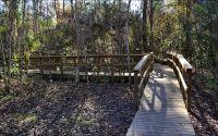 Interpretive boardwalk to limestone sinkhole at Wakulla Springs State Park