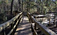 Interpretive boardwalk with seating area at Wakulla Springs State Park
