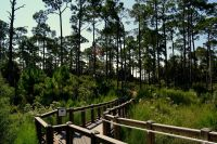 Another headquarter's accessible trail at St. Marks National Wildlife Refuge