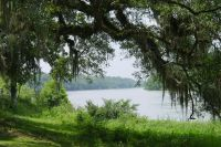 Bird watch on banks of Apalachicola River